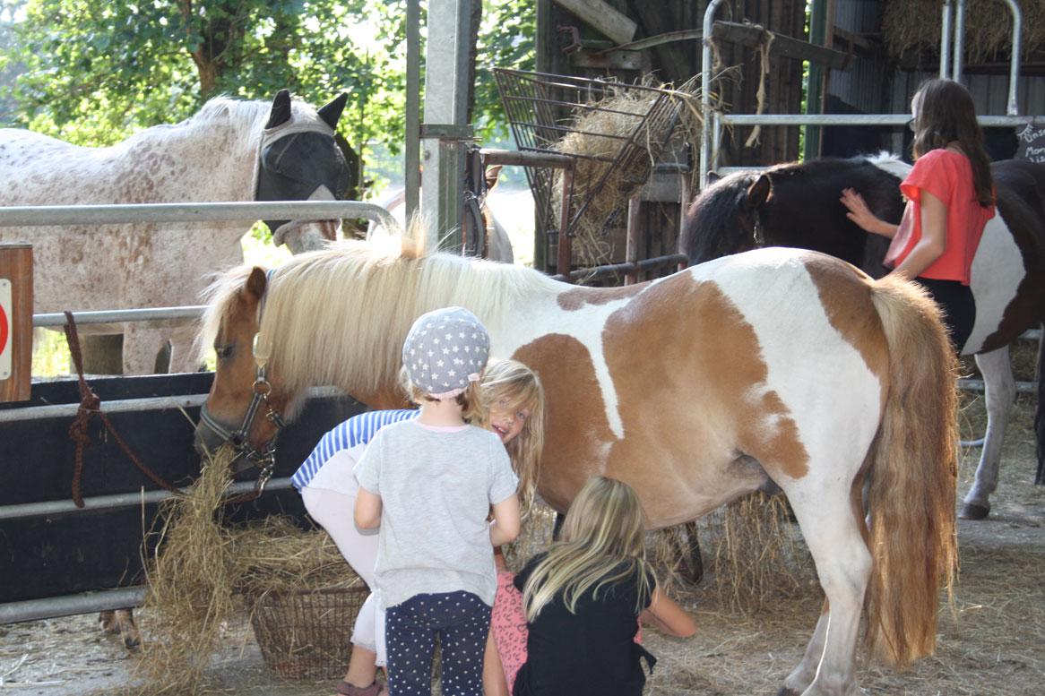 Pony_Kinder