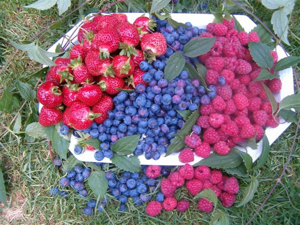 fruchtanbau-04