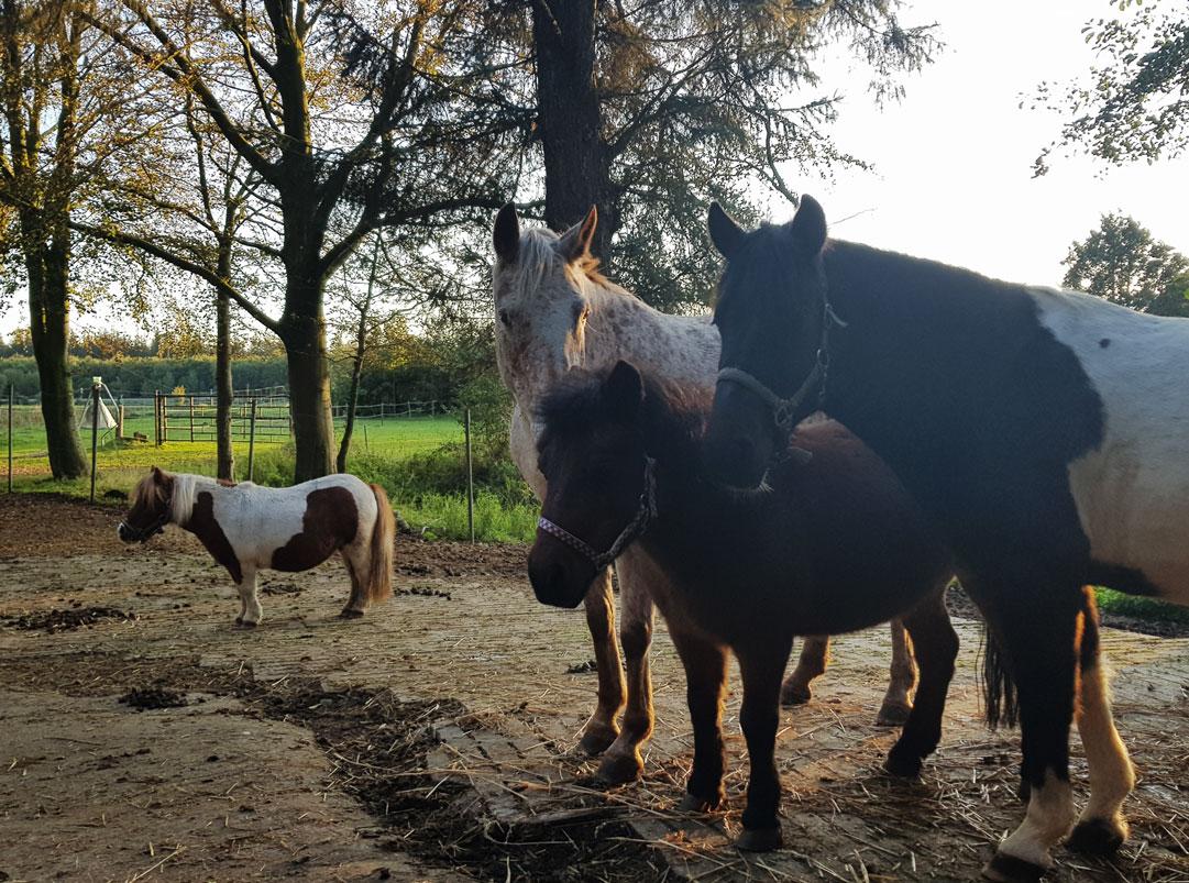 Pony-und-Pferd